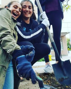 Students from GNAG's C.A.T. Squad plant tulips along Bank Street in the Glebe.